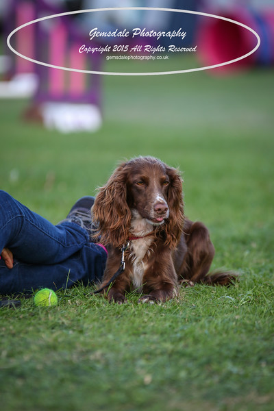 Southdowns Agility 25th September 2016-1000