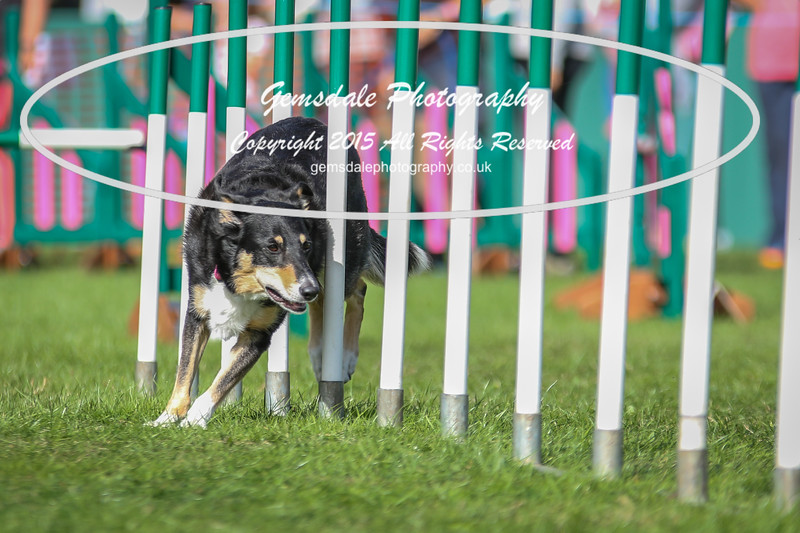 Southdowns Agility 25th September 2016-1029