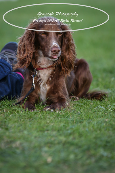 Southdowns Agility 25th September 2016-1002