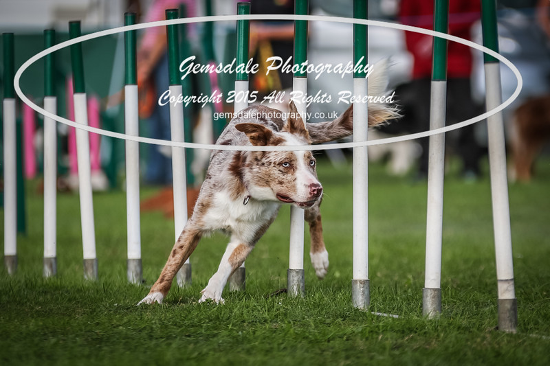 Southdowns Agility 25th September 2016-1014