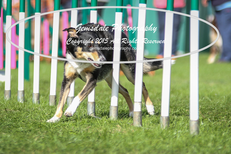 Southdowns Agility 25th September 2016-1035