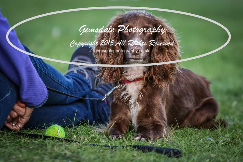 Southdowns Agility 25th September 2016-1001