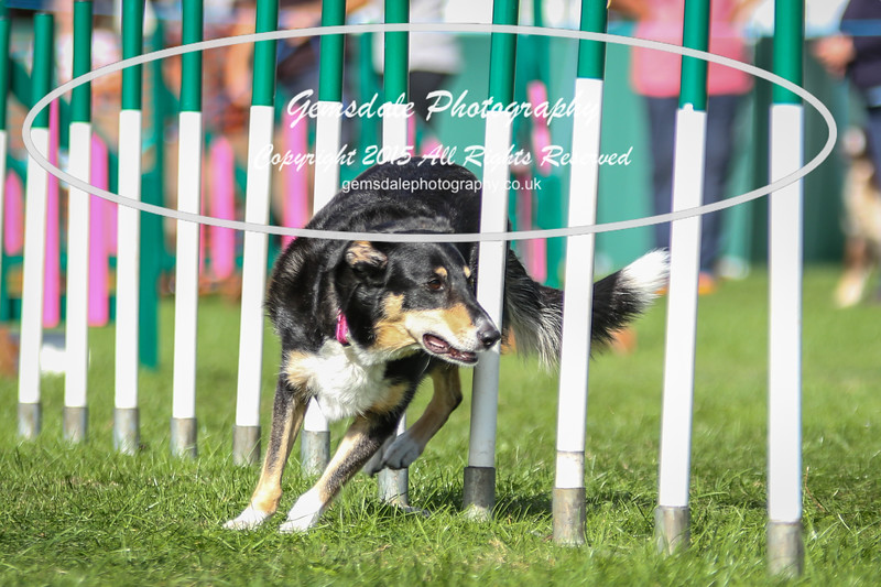 Southdowns Agility 25th September 2016-1040