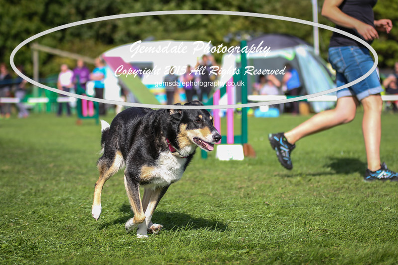 Southdowns Agility 25th September 2016-1034