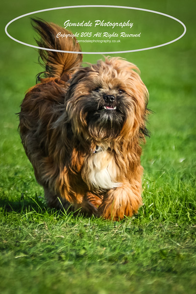 Southdowns Agility 25th September 2016-1021