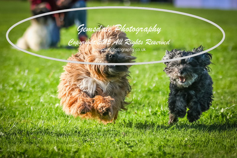 Southdowns Agility 25th September 2016-1023