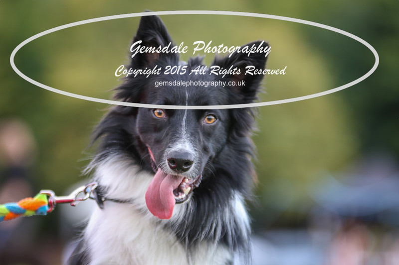 Southdowns Agility 25th September 2016-1007