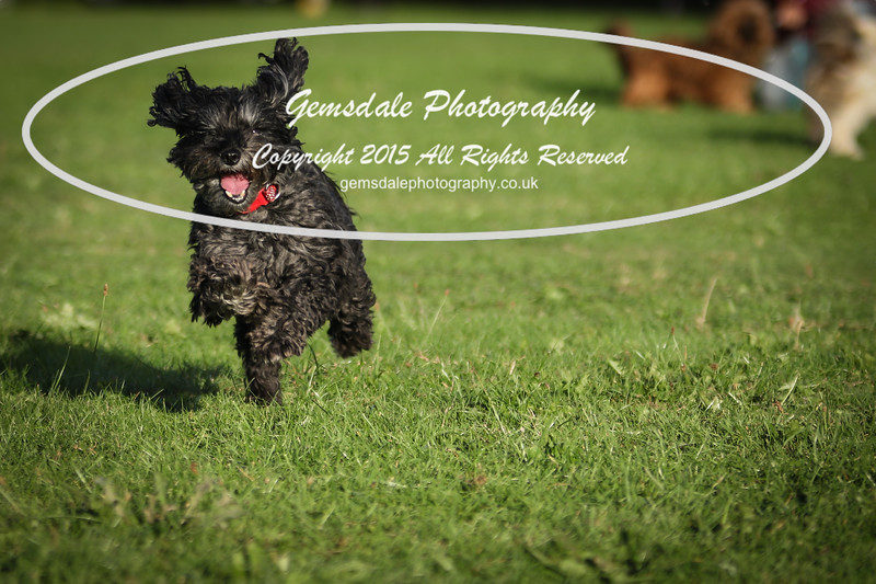 Southdowns Agility 25th September 2016-1024