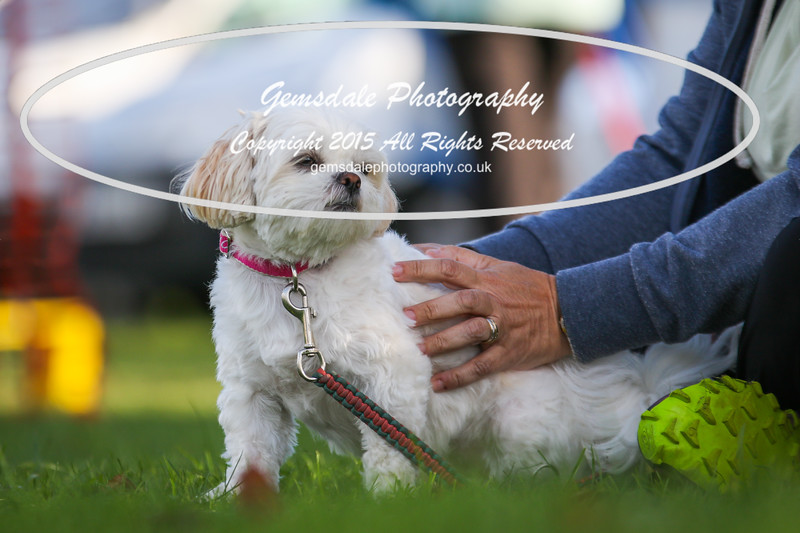 Southdowns Agility 25th September 2016-1005