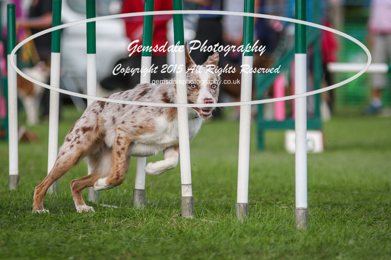 Southdowns Agility 25th September 2016-1016