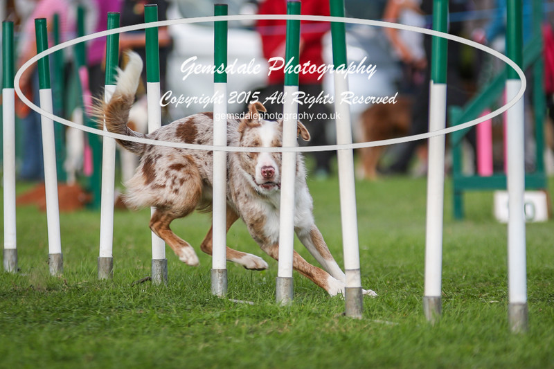 Southdowns Agility 25th September 2016-1015
