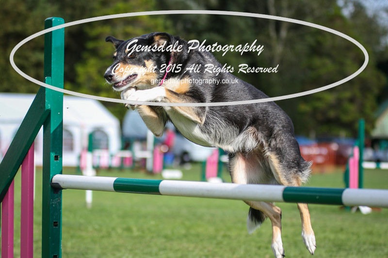 Southdowns Agility 25th September 2016-1032