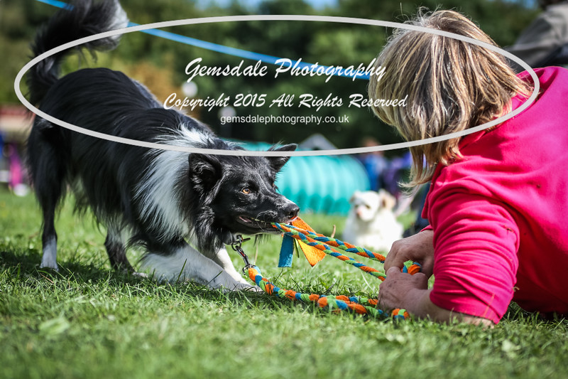 Southdowns Agility 25th September 2016-1010