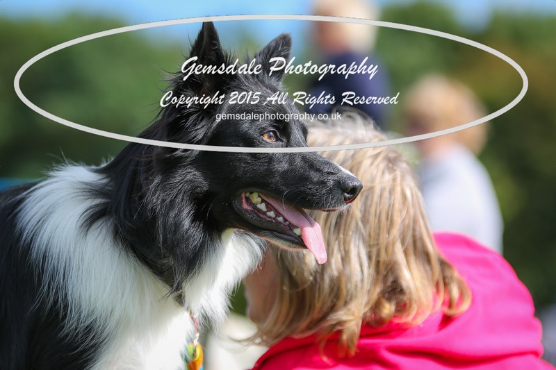 Southdowns Agility 25th September 2016-1011
