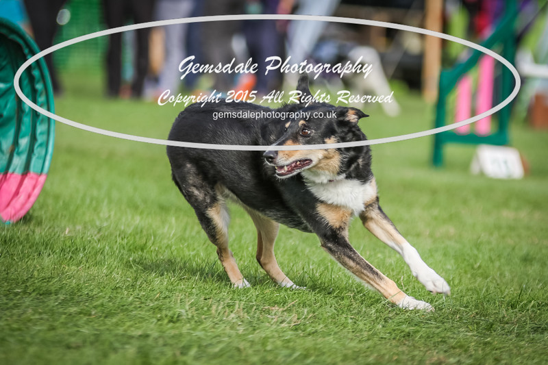 Southdowns Agility 25th September 2016-1028