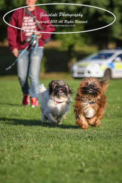 Southdowns Agility 25th September 2016-1022
