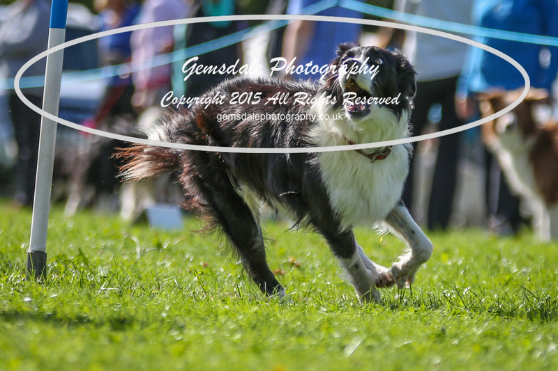 Southdowns Agility 25th September 2016-4023