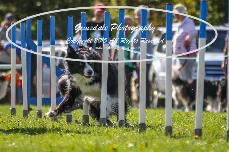 Southdowns Agility 25th September 2016-4029