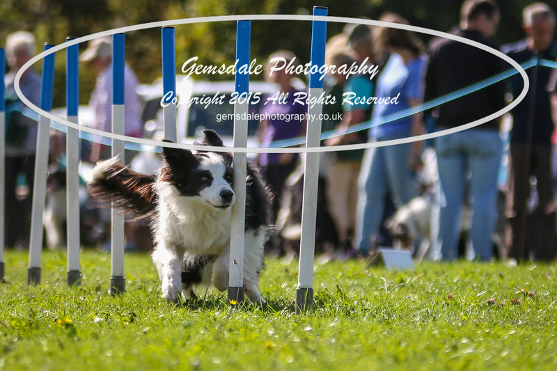 Southdowns Agility 25th September 2016-4035