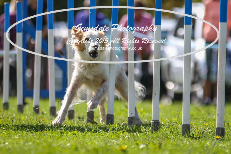 Southdowns Agility 25th September 2016-4011