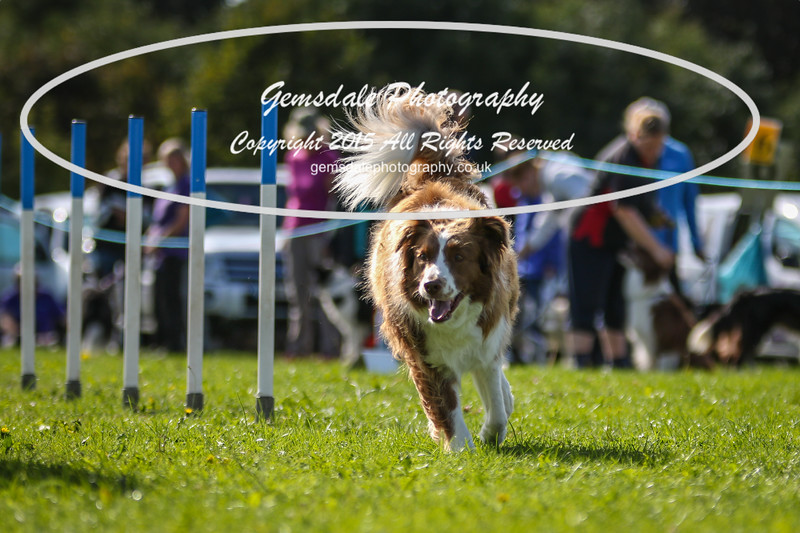 Southdowns Agility 25th September 2016-4039
