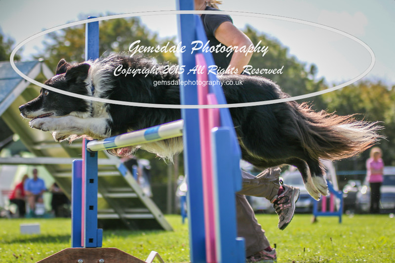 Southdowns Agility 25th September 2016-4018