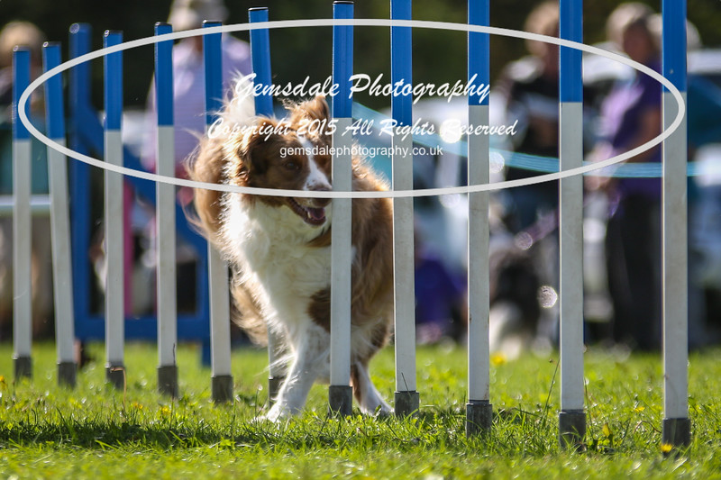 Southdowns Agility 25th September 2016-4038