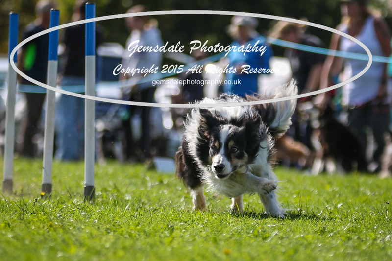 Southdowns Agility 25th September 2016-4045