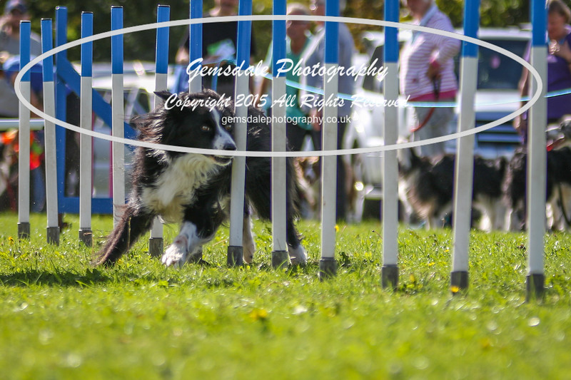 Southdowns Agility 25th September 2016-4030