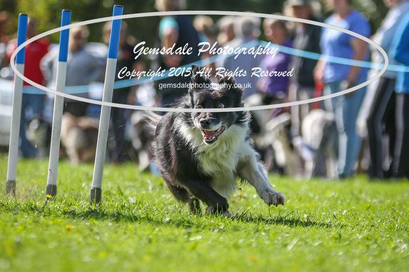 Southdowns Agility 25th September 2016-4017