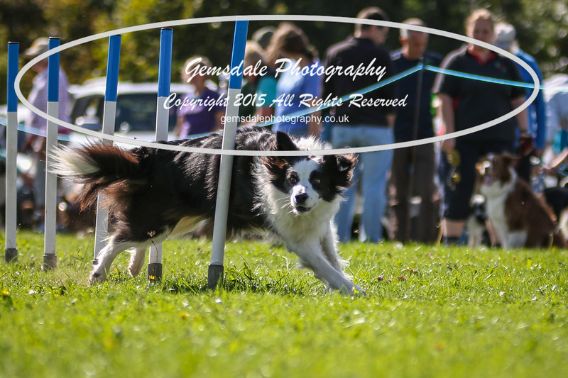 Southdowns Agility 25th September 2016-4036