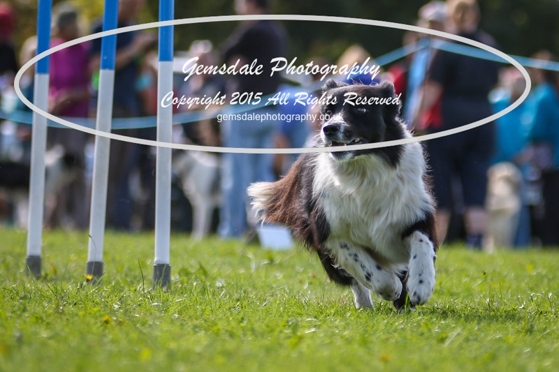 Southdowns Agility 25th September 2016-4041