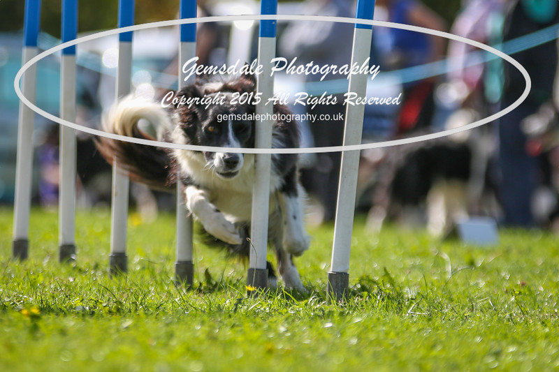 Southdowns Agility 25th September 2016-4022