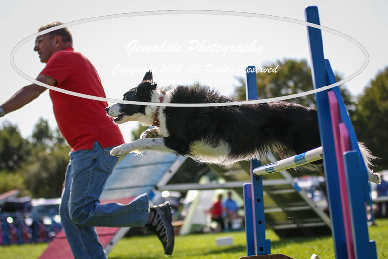 Southdowns Agility 25th September 2016-4026