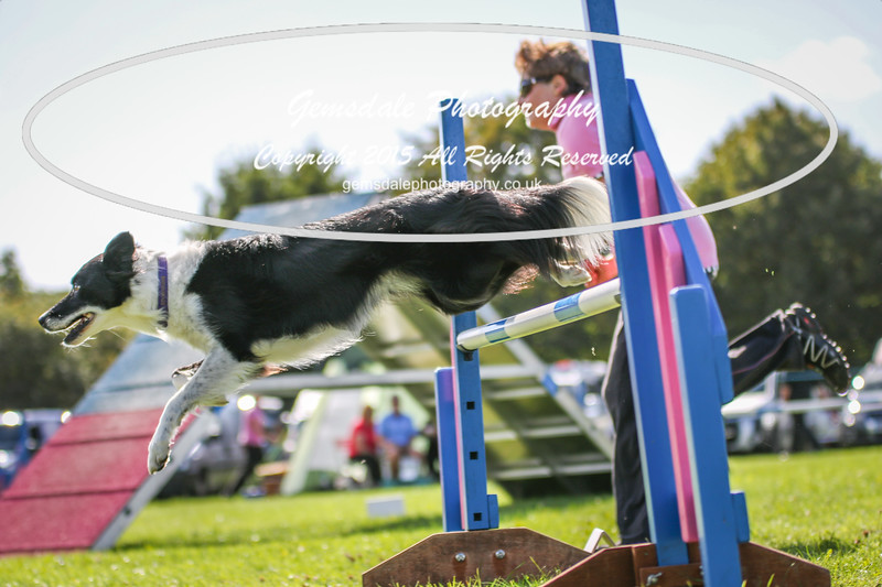 Southdowns Agility 25th September 2016-4020