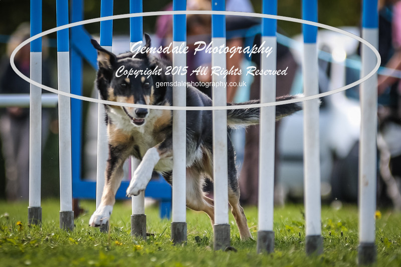 Southdowns Agility 25th September 2016-4007