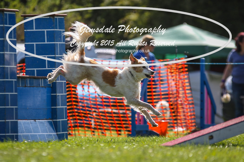 Southdowns Agility 25th September 2016-4014