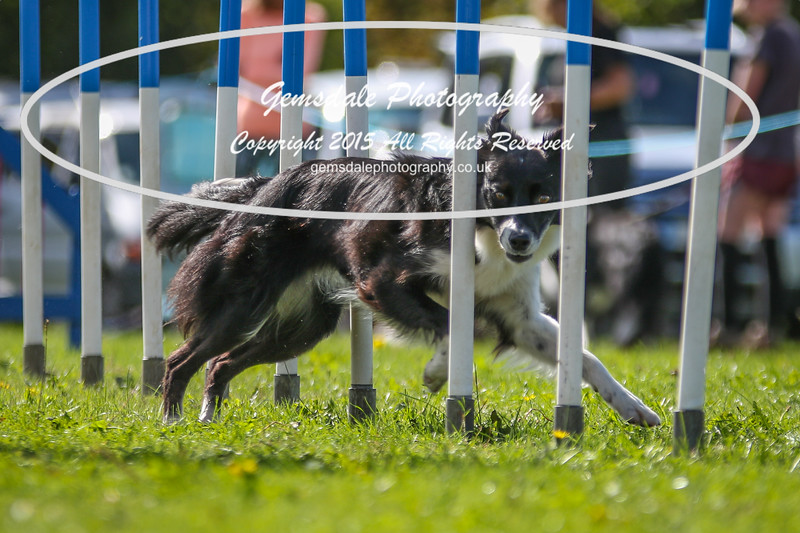 Southdowns Agility 25th September 2016-4019