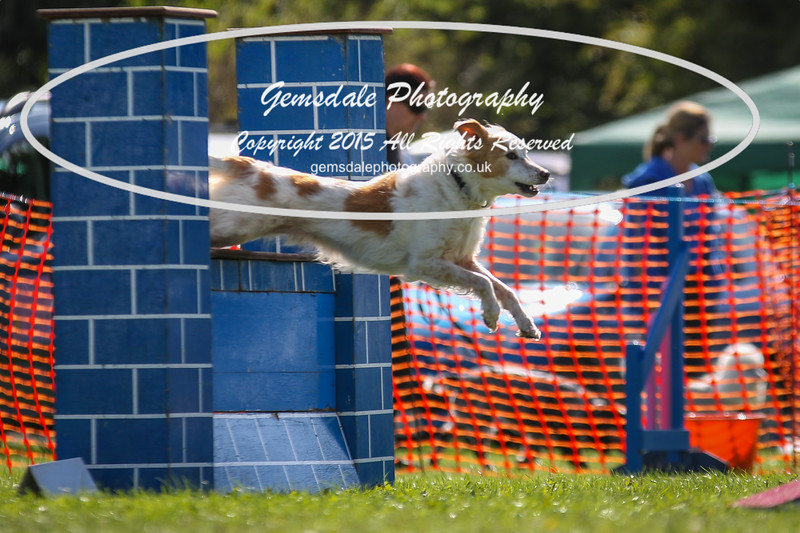 Southdowns Agility 25th September 2016-4013