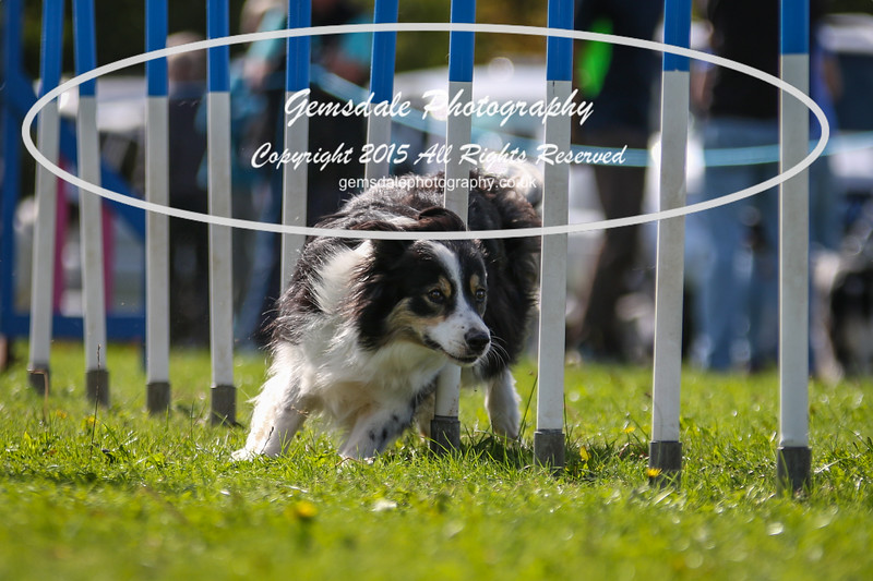 Southdowns Agility 25th September 2016-4044