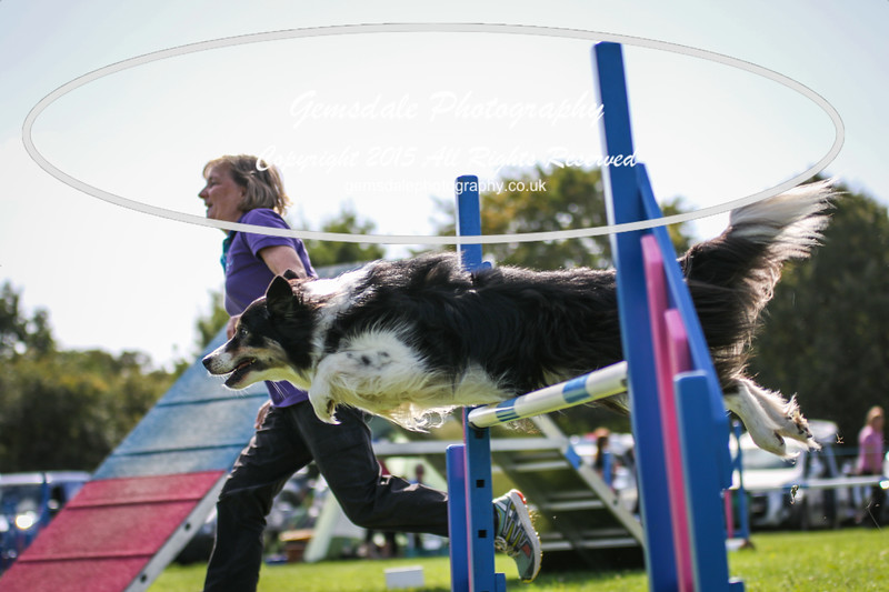 Southdowns Agility 25th September 2016-4047