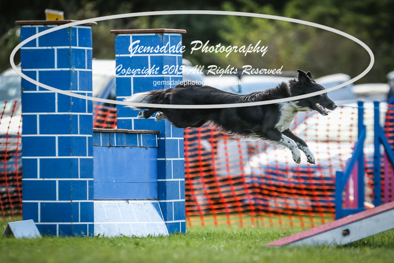 Southdowns Agility 25th September 2016-4005