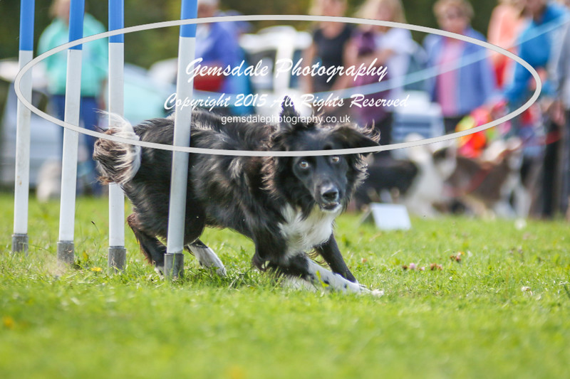 Southdowns Agility 25th September 2016-4002