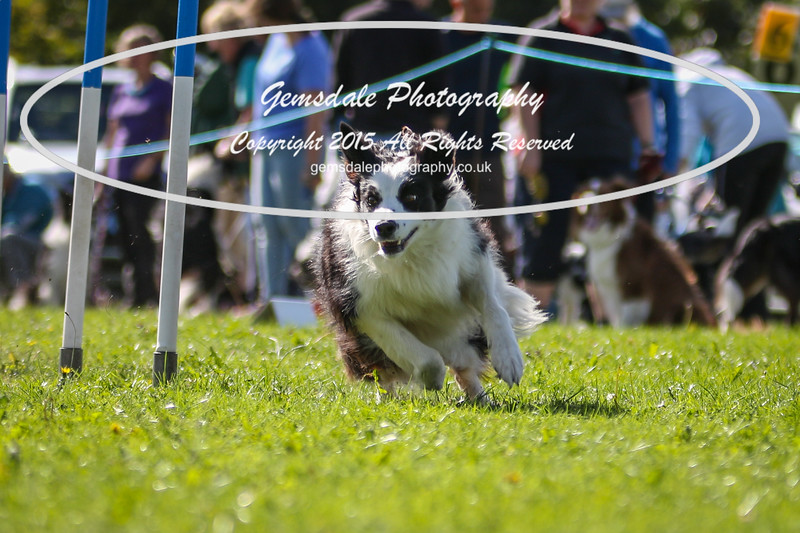 Southdowns Agility 25th September 2016-4037