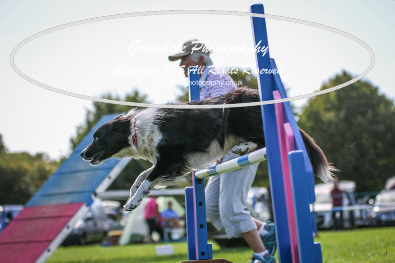 Southdowns Agility 25th September 2016-4042