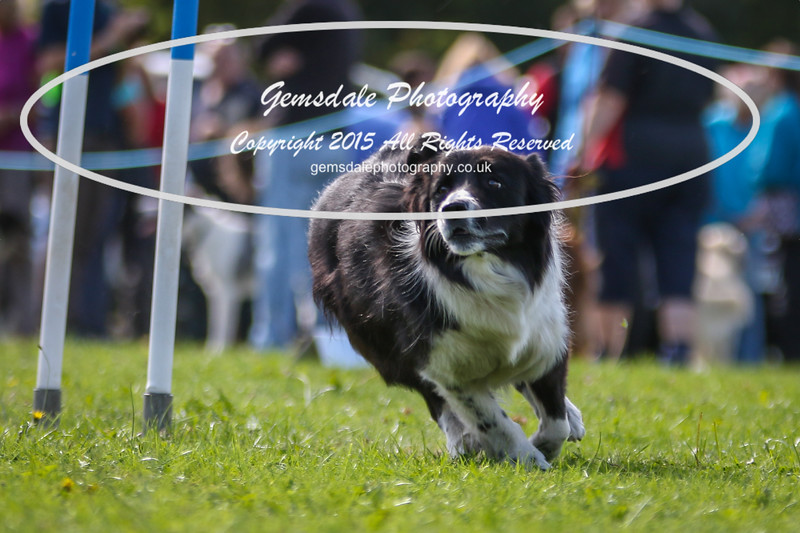 Southdowns Agility 25th September 2016-4040