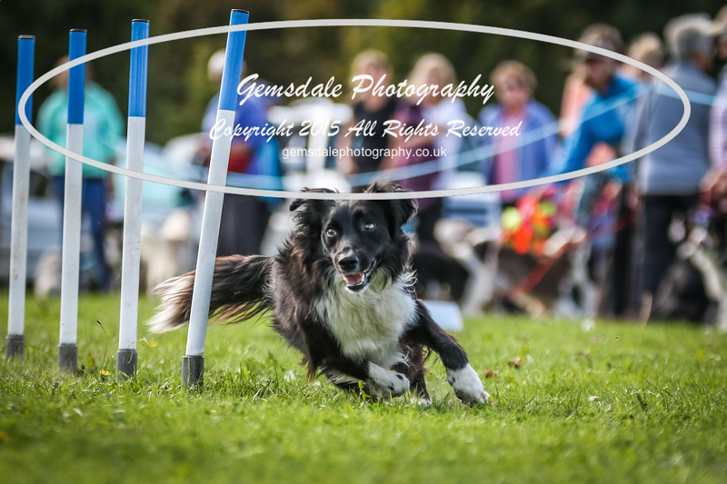 Southdowns Agility 25th September 2016-4003
