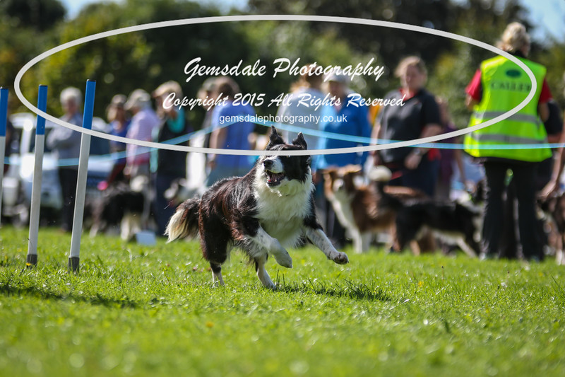Southdowns Agility 25th September 2016-4024