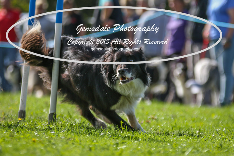 Southdowns Agility 25th September 2016-4016