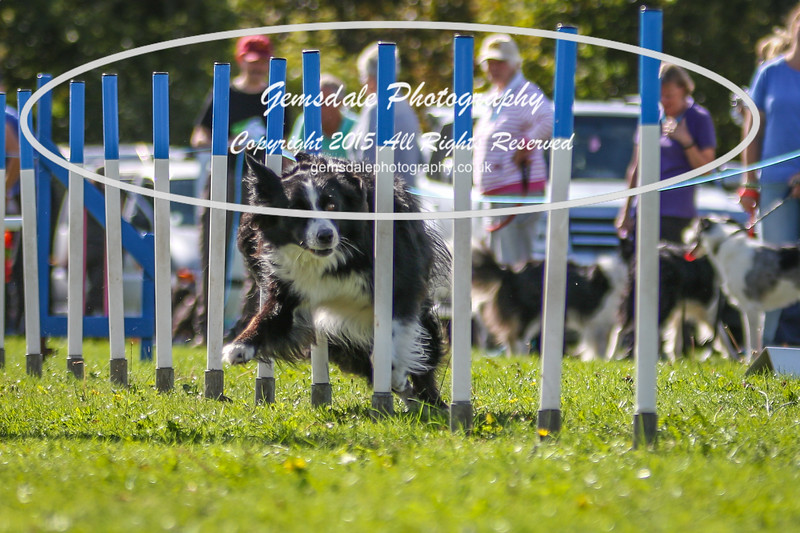 Southdowns Agility 25th September 2016-4031